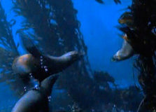 Els oceans (National Geographic, en anglès)