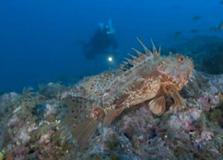 Pescar amb reserves (TVE)